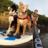 Stand Up Paddleboard Pet Traction Mat